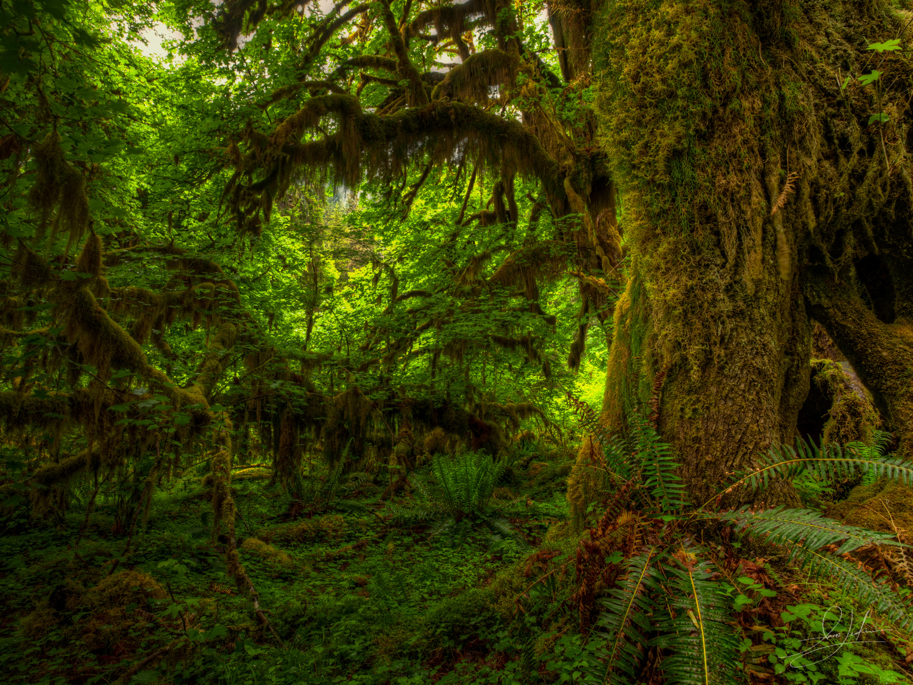 0605-Hoh Rain Forest-IMG_1646_7_8
